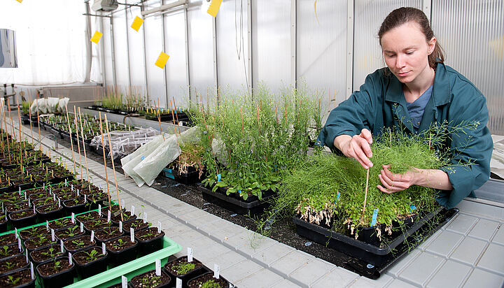 a botanical researcher working in the lab